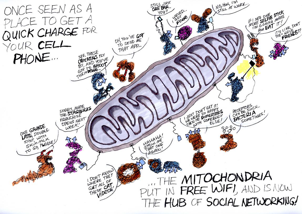 New Cartoons Cytokines And Mitochondria Good Science Writing