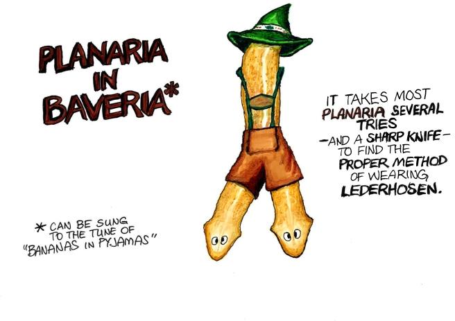planaria2