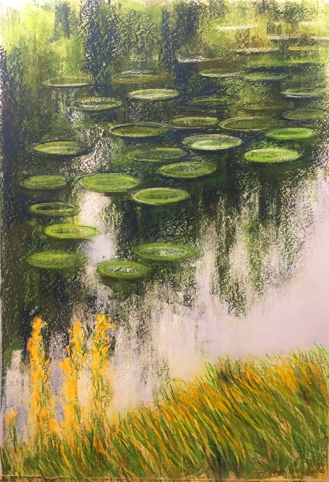 Water lilies from Holland